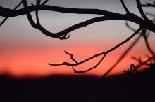 Crépuscule branché (1024x681)