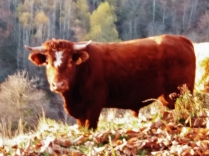 Cornes d'aurochs