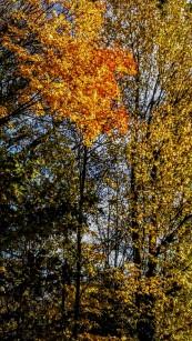 Nature belge